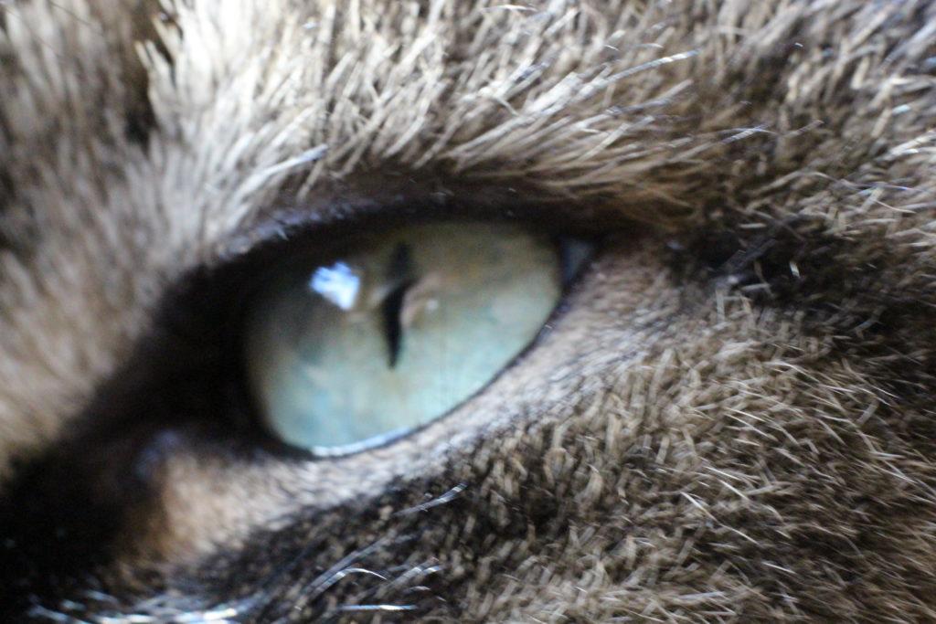 cats eye (macro)